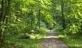 Wald von Scharbeutz
